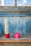 Small pink watering can and cactus. Blue vintage background.  royalty free stock image