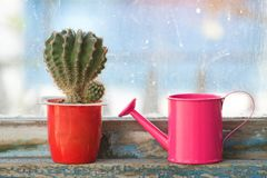 Small pink watering can and cactus on the old window.  stock photography