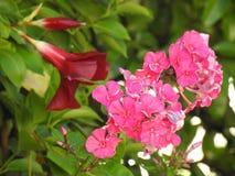 Small pink wildflowers Stock Photo