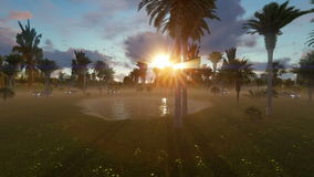 Small placid lake between palms trees at sunset. Time stock video footage
