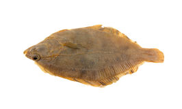 Small plaice isolated Stock Photo