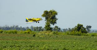 A Yellow Crop Duster Flies over the Fields Spreading Chemicals. A small plane spreads chemicals and pesticides over the farm fields Royalty Free Stock Image