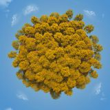 Small planet with a yellow autumn trees Royalty Free Stock Photo
