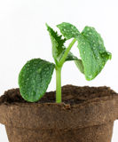 Small plant Royalty Free Stock Photos