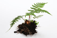 Small plant. Royalty Free Stock Photography
