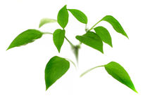 Small plant. Small green plant Stock Photo