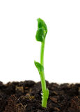 Small Plant Royalty Free Stock Images