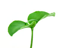 Small plant Royalty Free Stock Photo