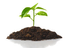 Small plant Stock Images