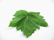 Small plant Stock Photography
