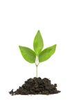 Small Plant Stock Photo