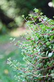 Plant with bokeh background Royalty Free Stock Photos