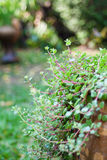 Plant with bokeh background Stock Image