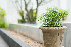 Small plant in a cement pond Royalty Free Stock Image