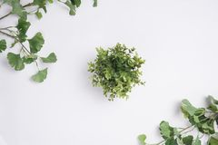 Small Plant Centered Tree Branches Flat Lay Top View. A Small Plant Centered Tree Branches Flat Lay Top View Royalty Free Stock Photos