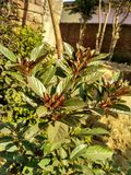 Small plant. A click of a colourful plant Stock Images