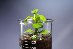 Free Small Plant Coming Out From A Laboratory Glass Royalty Free Stock Photography - 66476357