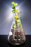 Small plant coming out from a laboratory glass decanter Stock Photo