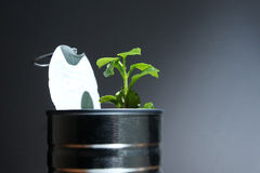 Small plant coming out from an opened can Royalty Free Stock Image