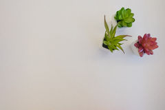 Small plant. At corner with white background Royalty Free Stock Image