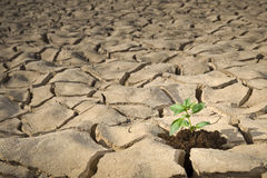 Small plant cracked soil Stock Photo