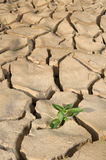 Small plant cracked soil Royalty Free Stock Images
