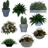 Small plant 3D collection. Collection of small potted plants, cactus, grass. 3D rendering Stock Photos