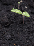 Small plant in dark earth Stock Image