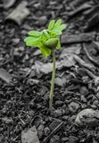 Small plant on dead soil Stock Photography