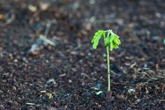 Small plant on dead soil Stock Images