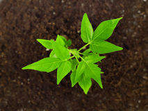 Small plant in dirt stock photo
