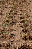 The small plant on the dried land Stock Photo