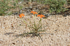 Small plant in a drought area Stock Photography