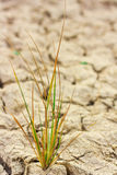 Small plant in dry brown soil Stock Photos