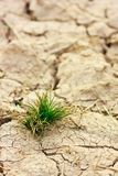 Small plant in dry brown soil Royalty Free Stock Photography