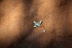 Small plant on dry earth Stock Photo