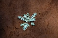 Small plant on dry earth Royalty Free Stock Image