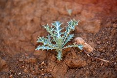 Small plant on dry earth Stock Image