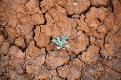 Small plant on dry earth Royalty Free Stock Photos