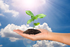 Small plant in female hand on cloud and sky Stock Photos