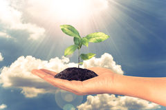 Small plant in female hand on cloud and sky concept Royalty Free Stock Image