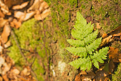 Small plant fern Stock Images