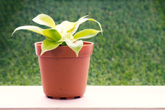 Small plant in flower pot in warm tone Royalty Free Stock Images