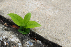 Small plant germinate Grow up on the cement floor. Copy space Royalty Free Stock Photography