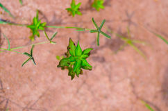Small plant. Green plant, Thailand Royalty Free Stock Image
