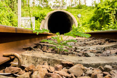 Small plant grow up between the railway Royalty Free Stock Photo