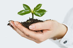 Small plant growing Stock Image