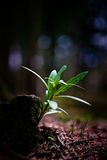 Small plant growing Stock Photography