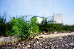 Small plant Royalty Free Stock Photography