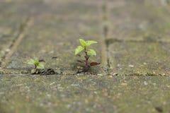 Small plant growing between bricks Stock Photos